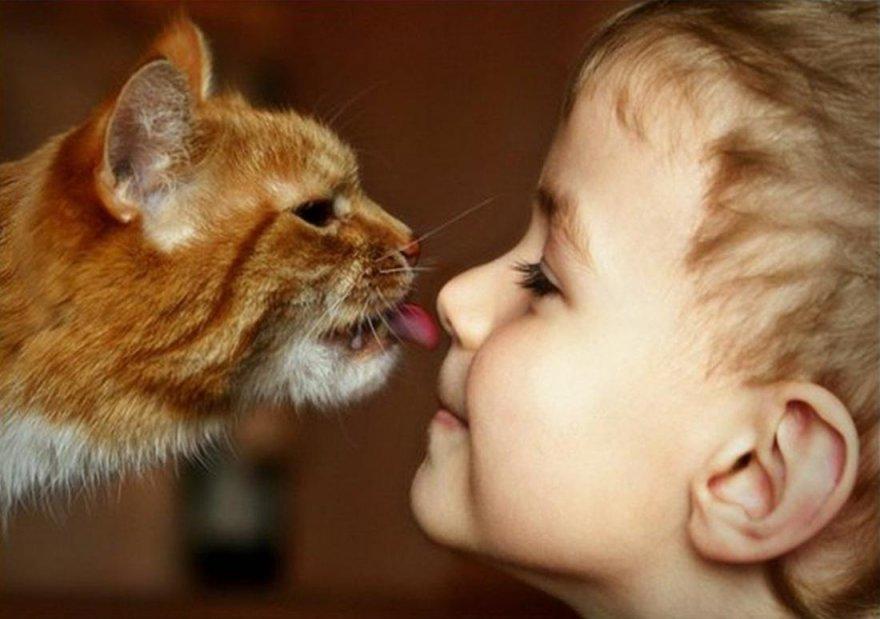 Как коты выражают свою любовь