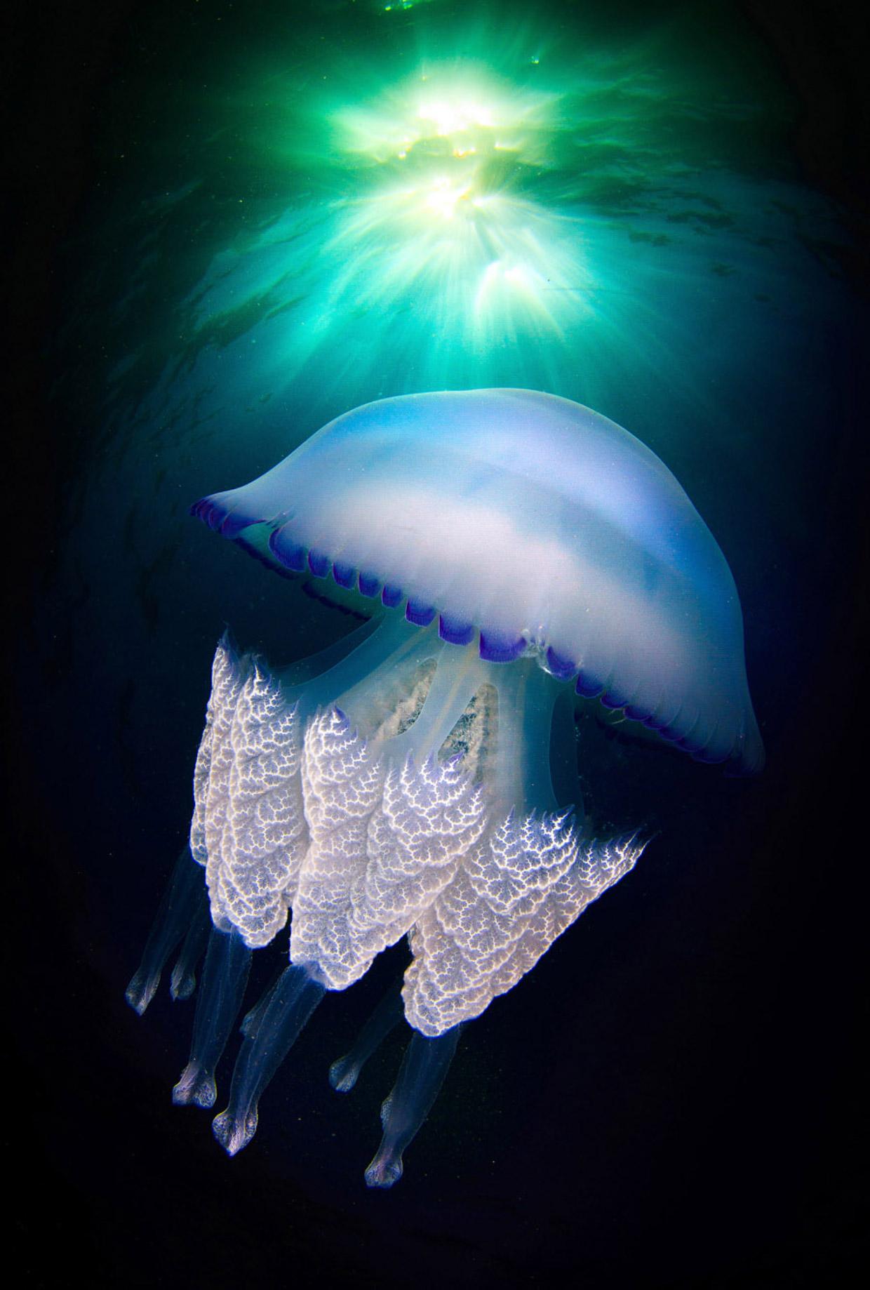 Подробный взгляд на медузу