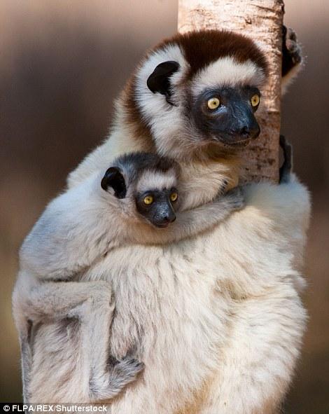 Милые мамы среди животных со своими детёнышами