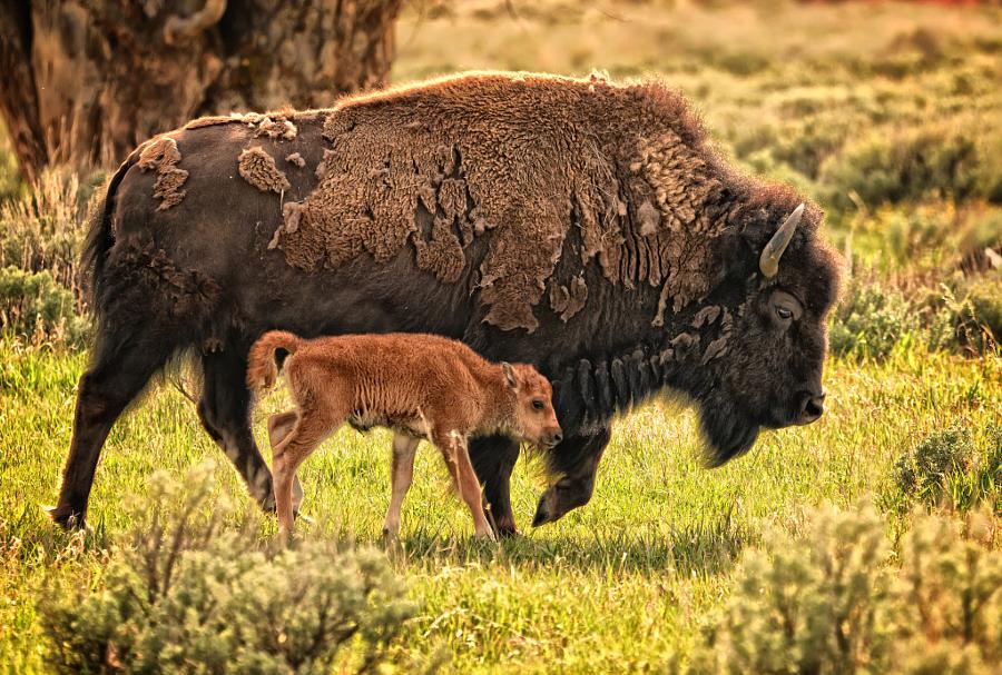 Большие и маленькие животные вместе