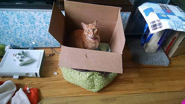 Домики для кошек и непостижимая кошачья логика