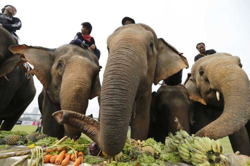 Поло на слонах в Таиланде