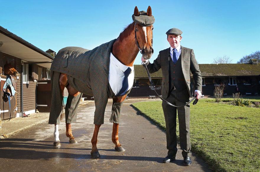 Коня нарядили в твидовый костюм