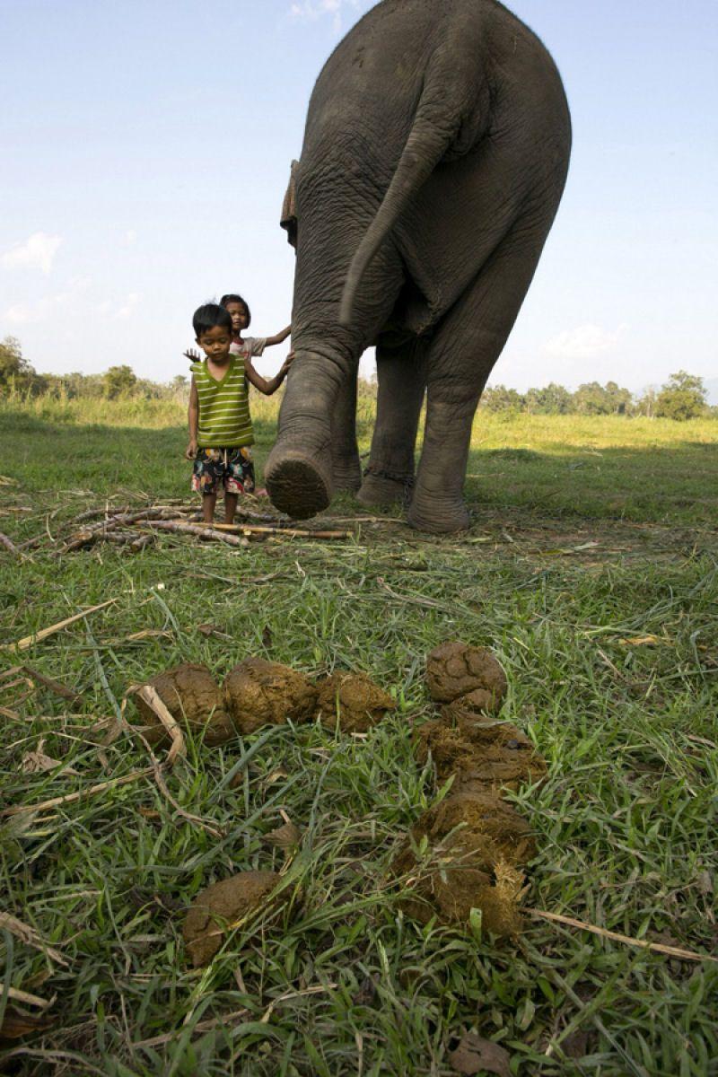 Как делают Black ivory — самый дорогой кофе в мире
