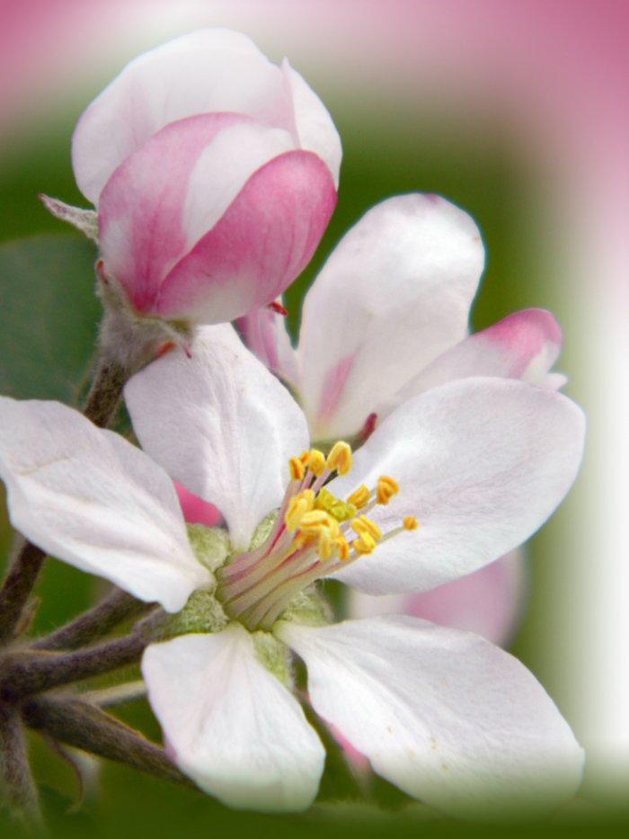 Как выглядит во время цветения наша будущая пища