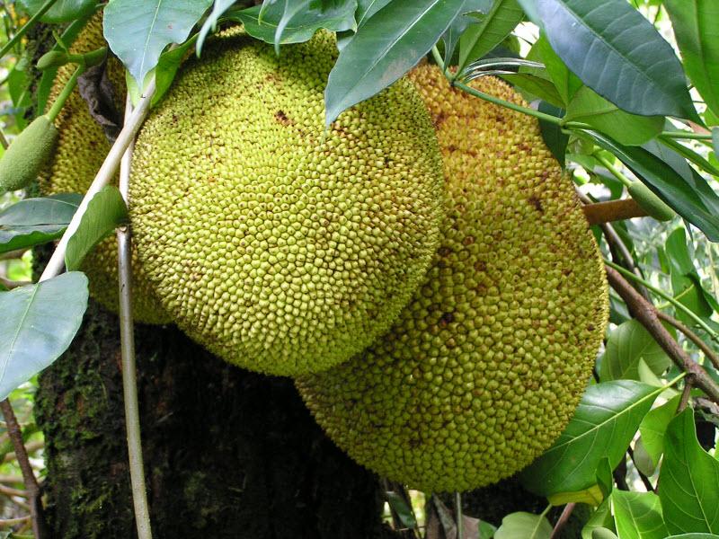 20 необыкновенных экзотических фруктов нашей планеты