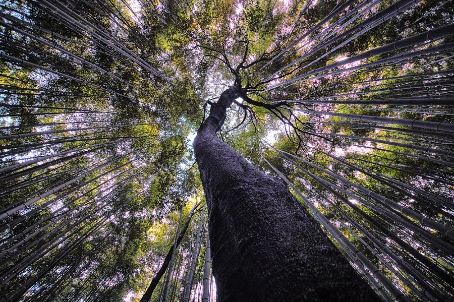 20 популярных фотографий природы на 500px в 2016 году