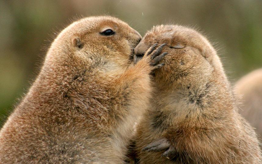 Фото обнимашки животных