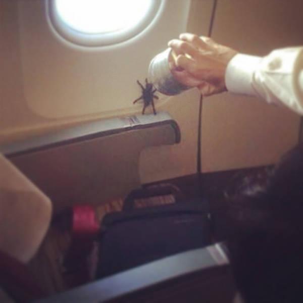 Жуткие попутчики в самолете, которые доставляют дискомфорт