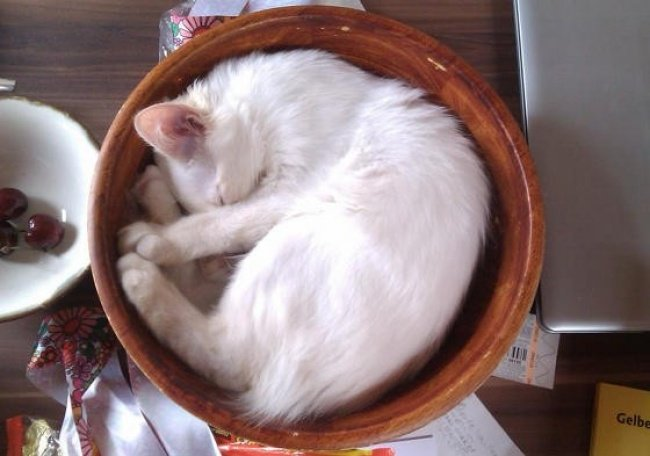 Кошки отдыхают в самых неожиданных местах