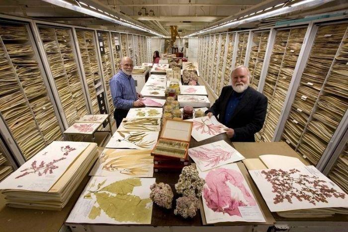 Внутри хранилища Национального музея естественной истории в Вашингтоне