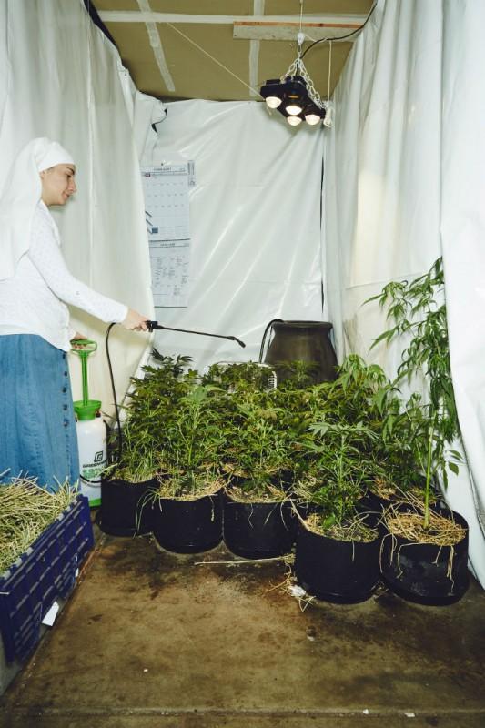 Как калифорнийские монахини выращивают марихуану