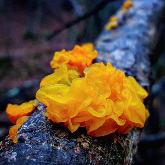 Мир грибов на фотографиях Райана Грэсторфа