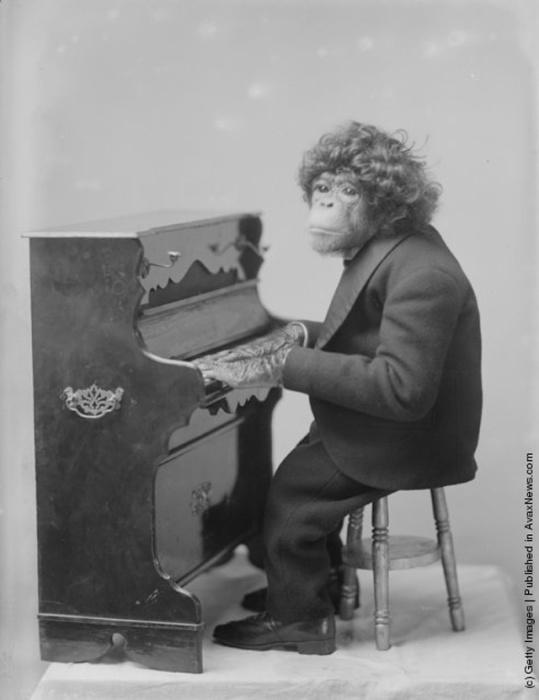 20 шуточных фотографий из прошлого, на которых животные музицируют
