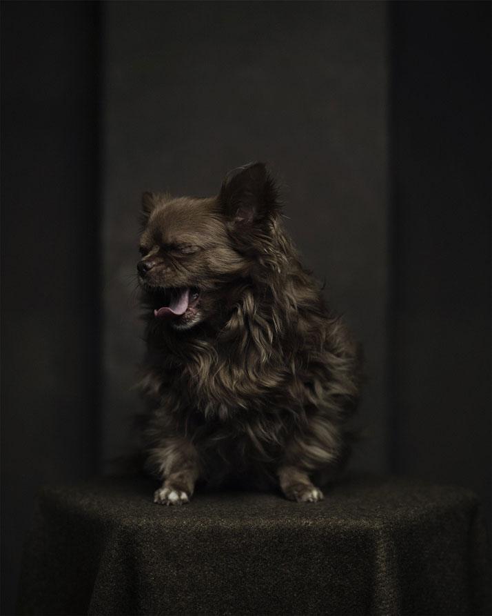 Портреты животных с человеческими эмоциями