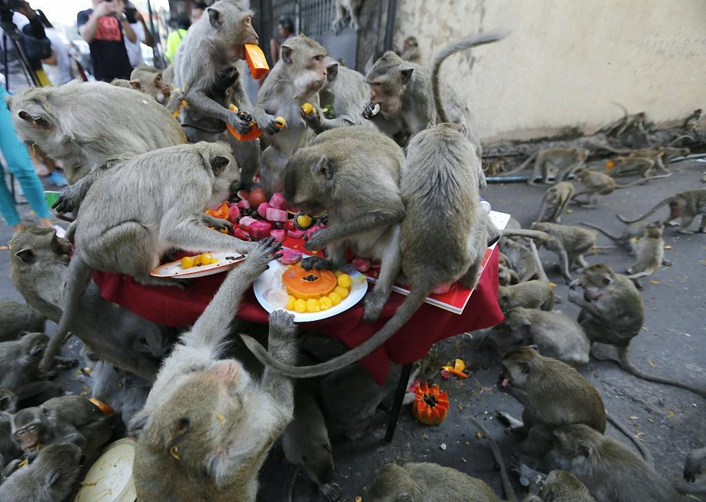 Как выглядят местные голуби в разных странах мира