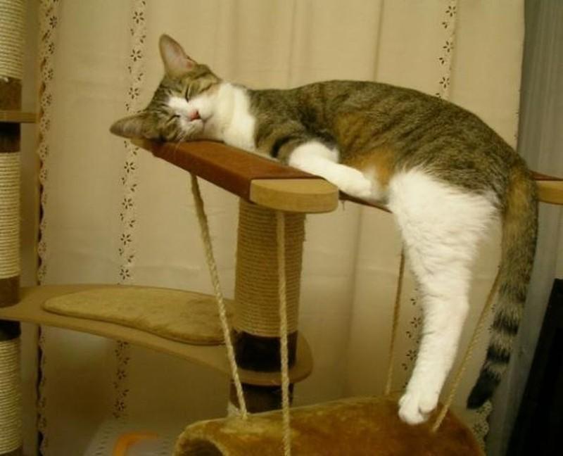 Коты спят картинки приколы, днем рождения