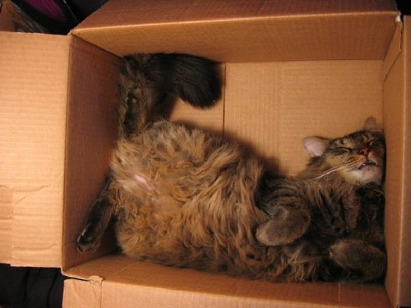 Коты, познавшие все тайны сна