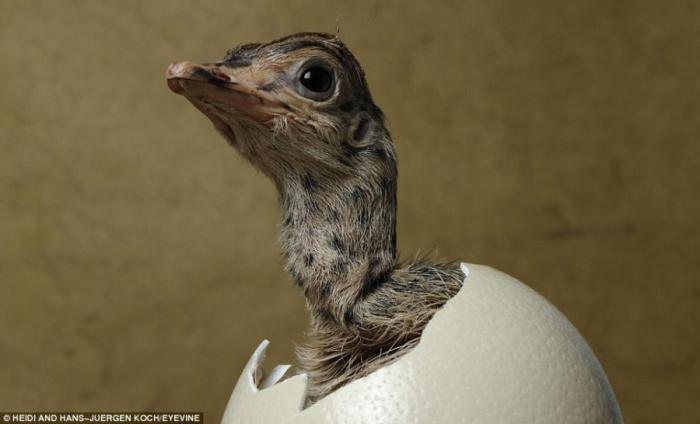 Крошки вылупляются из яиц