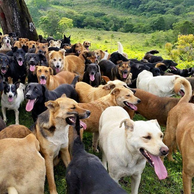 Рай для бродячих собак в Коста-Рике