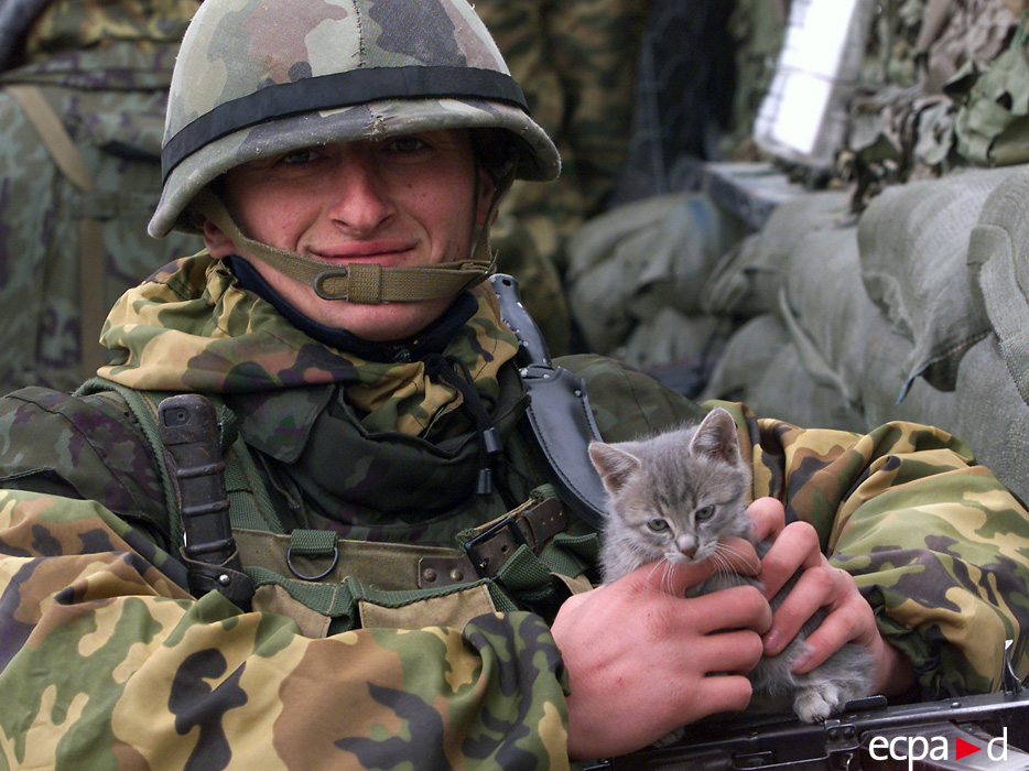 картинки боевых кошек коса была