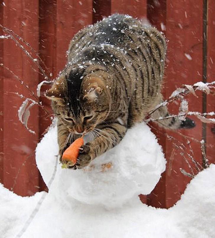 Коты, которых застали врасплох