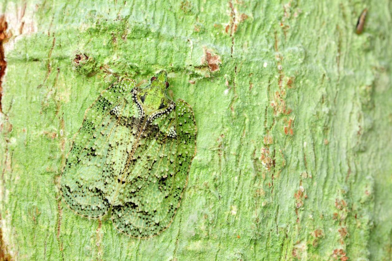 Мимикрия: искусство камуфляжа у насекомых