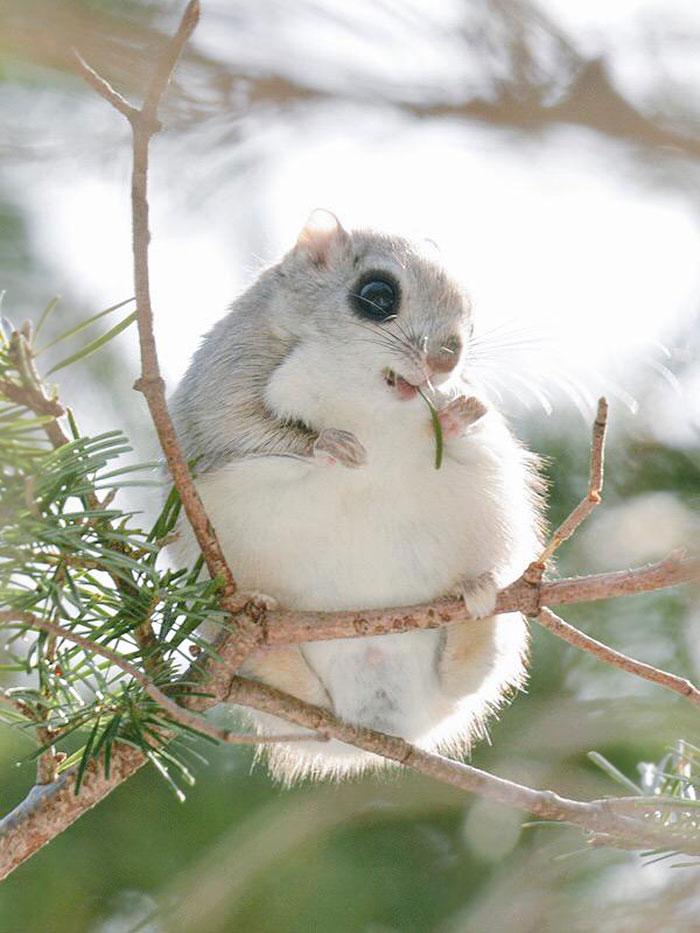 7 милых животных с острова Хоккайдо