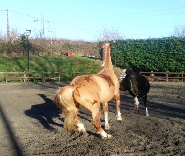 Фигурные стрижки лошадей от британской художницы