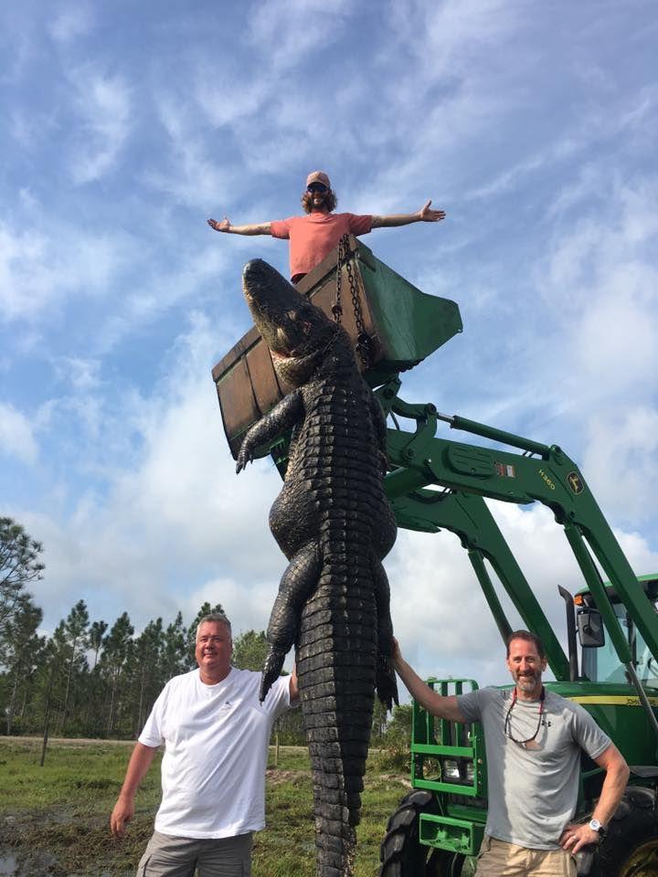Охотники из Флориды поймали гигантского аллигатора