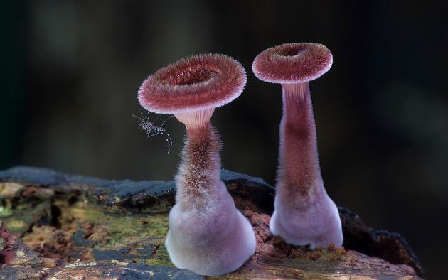 Природная красота и грибы от Стива Аксфорда