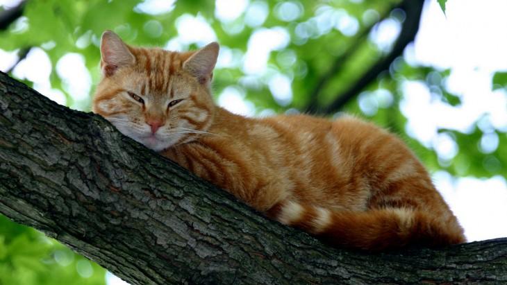 10 увлекательных фактов о кошачьей стратегии выживания в городах