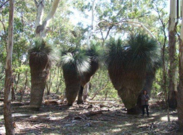 Необычные достопримечательности в Австралии