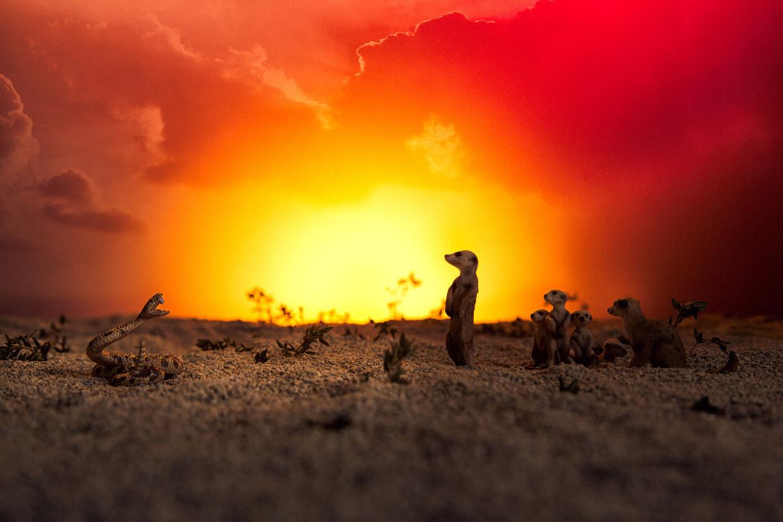 Овощное сафари от фотографа Julia Wimmerlin