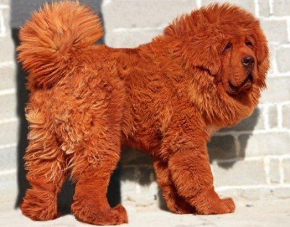 Самые редкие породы собак в мире