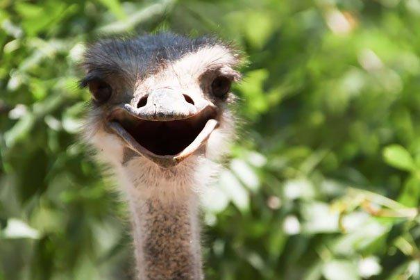 100 улыбающихся животных заряжают нас своим позитивом