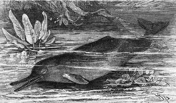 Интересные факты про дельфинов и их невероятные способности