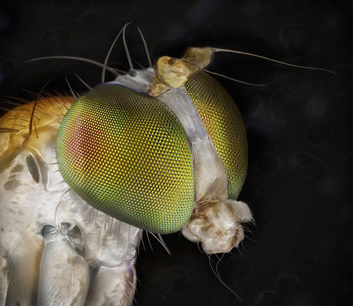 Удивительные портреты знакомых нам насекомых