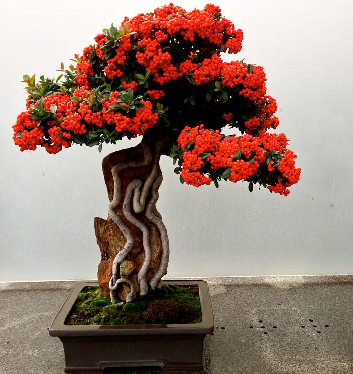 Красивейшие миниатюрные деревья бонсай