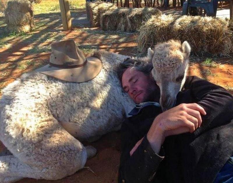 Маленькие кенгурята остаются умирать в сумке погибшей матери, пока не приходит он