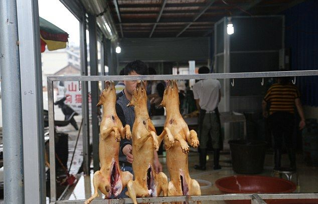 На китайском фестивале мяса по-прежнему едят кошек и собак
