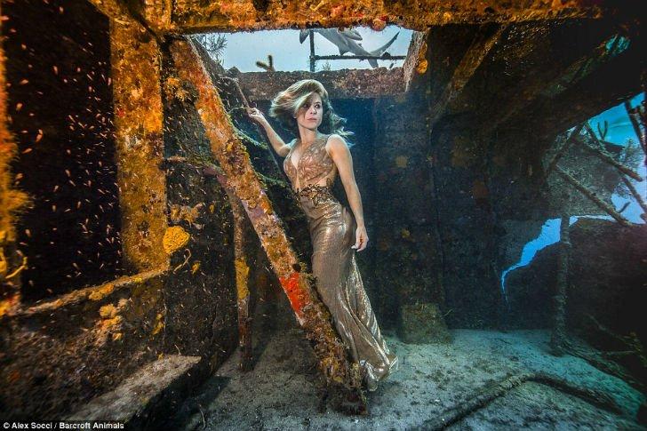Чтобы защитить акул, бразильская модель окунулась в воду с морскими хищниками