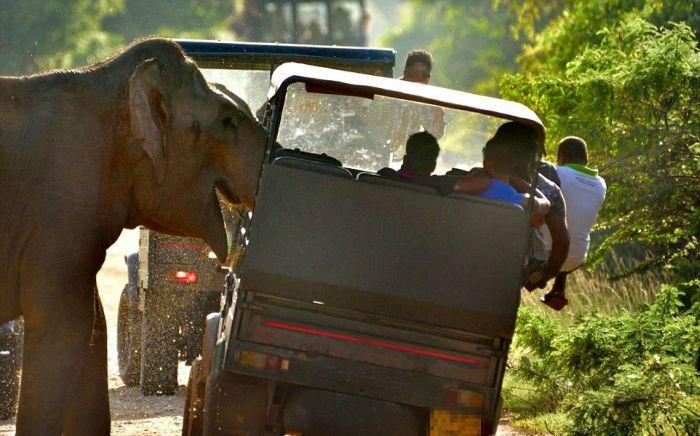 Слон потребовал еду у туристов
