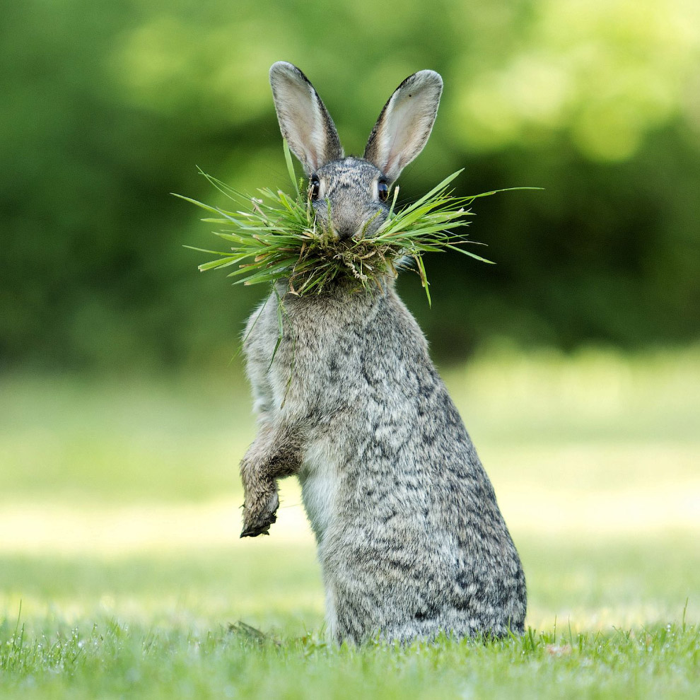 Днюхой, прикольную картинку зайца