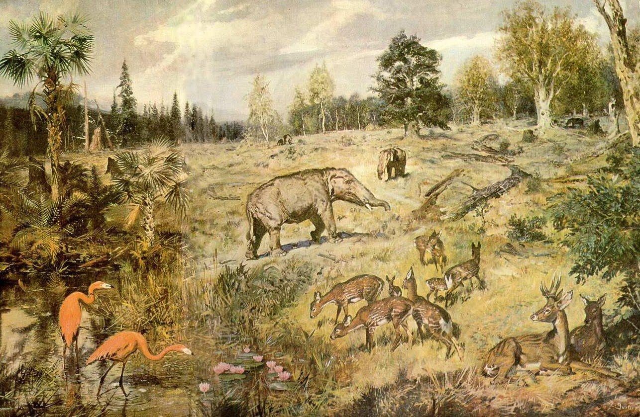 10 загадок природы, ответы на которые до сих пор не найдены