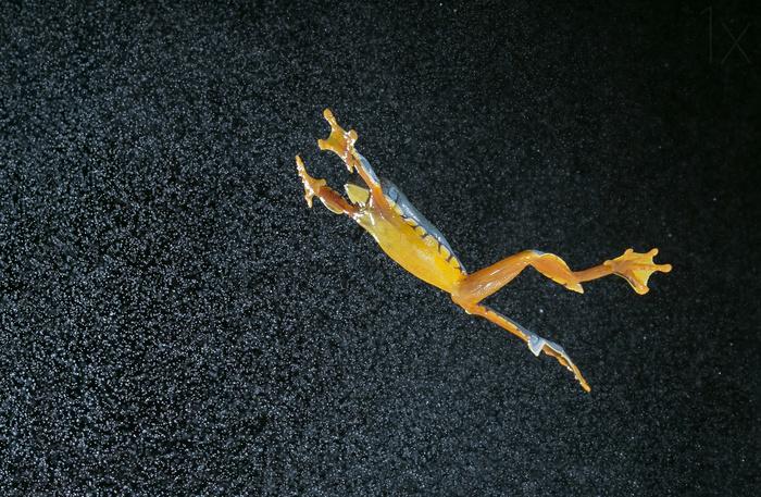 Чудеса высокоскоростной фотографии на снимках Николаса Рейсенса