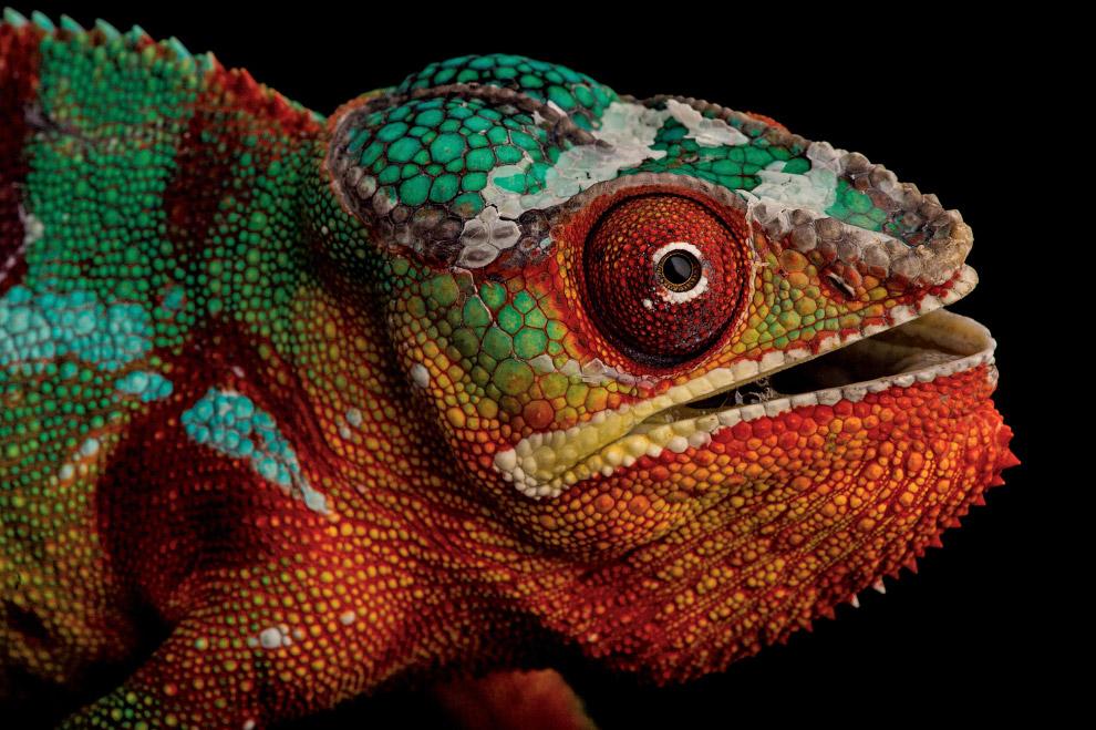 Фото-Ковчег и биологическое разнообразие нашего мира
