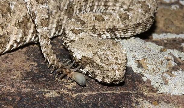 Интересные факты о пауках