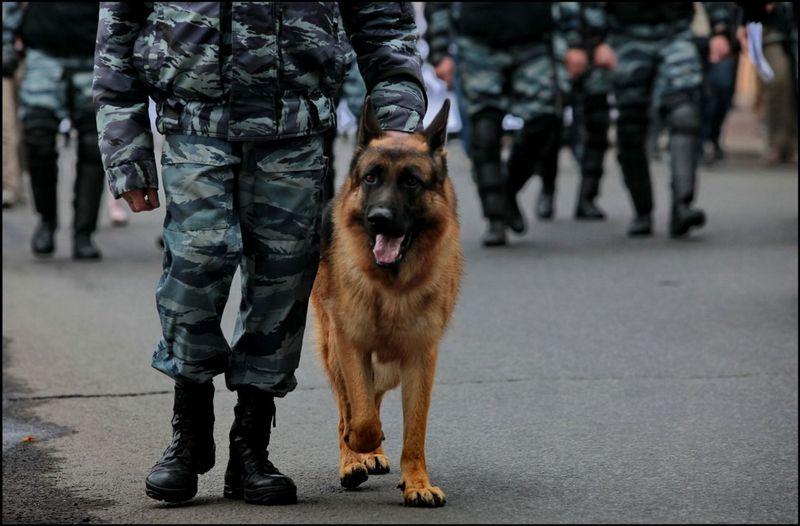 Породы собак, которые идеально подходят для службы в полиции