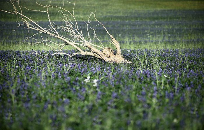Маскировка на фоне природы в бодиарт-проекте Метаморфозы